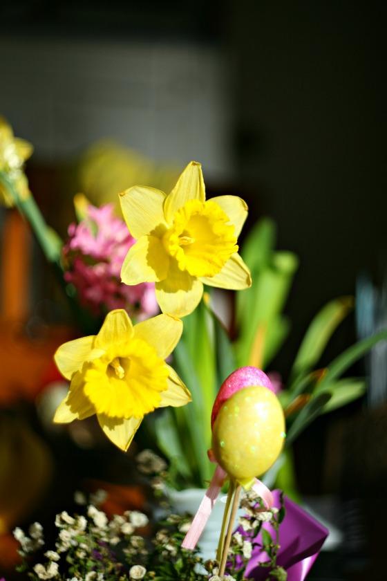 moredaffodils