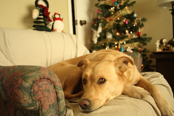 christmasgoldie
